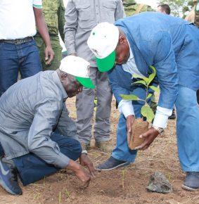 RCA: Planter l'arbre, c'est planter le jallon du développement socio économique