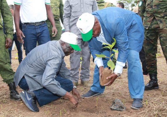 Le président Touadera et le PAN Ngone Baba, en exercice de plantation d'arbres forestiers