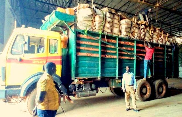 semence-ndjoni-sango-centrafrique